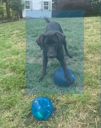 This is an example of image annotation using a bounding box. A dog is pictured standing in the grass, playing with two balls. The dog is the object of interest. The dog is labeled with a blue, rectangular bounding box.